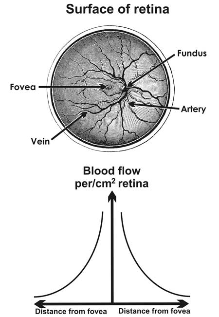 blood flow in eye and tunnel experience